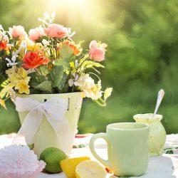 Langkah Menanam Bunga Amarilis Dalam Pot